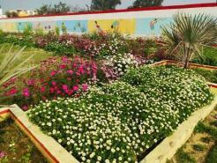 Teachers' efforts pay off, flowers bloom on Karnal school campus